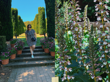 Get lost in the flowers of Fioli