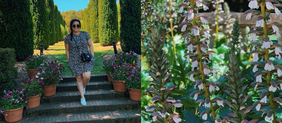 Get lost in the flowers of Fioli