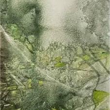 Rice field landscape in Ox Year 牛年田园景色