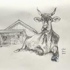 The Cow is Finally Home - revolutionaryrootsfarm