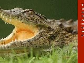 Monitoring Costa Rican Crocodiles With TROVAN