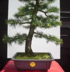 Preventing Bonsai Tree Theft With TROVAN