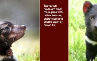 Saving The Tasmanian Devils With TROVAN