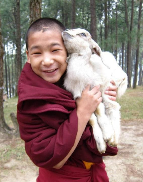 Young monk and baby goat