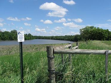 Wetland Restoration.JPG