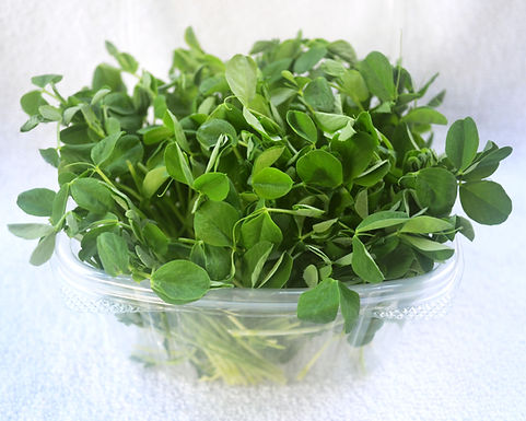 pea-microgreens-product.jpg
