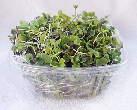 Spicy-salad-mix-microgreens-product.jpg