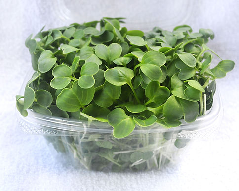 radish-microgreens-product.jpg
