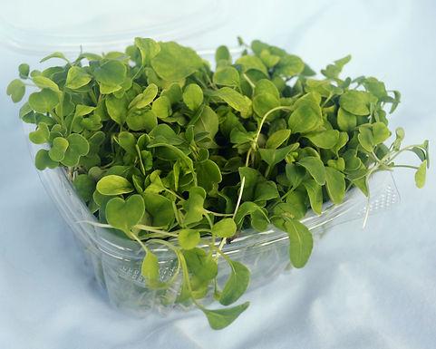 Arugula-Microgreens-product.jpg
