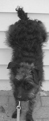 Ann Arbor Dog Training Dog Tricks