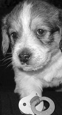 Ann Arbor Puppy Training Classes