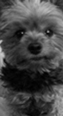 Ann Arbor Dog Trainer -Dog Training Classes
