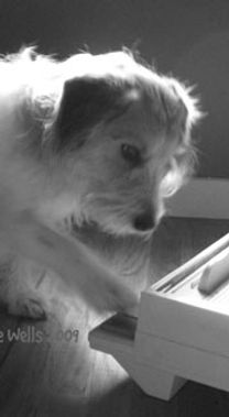 Howie, the dog, playing piano