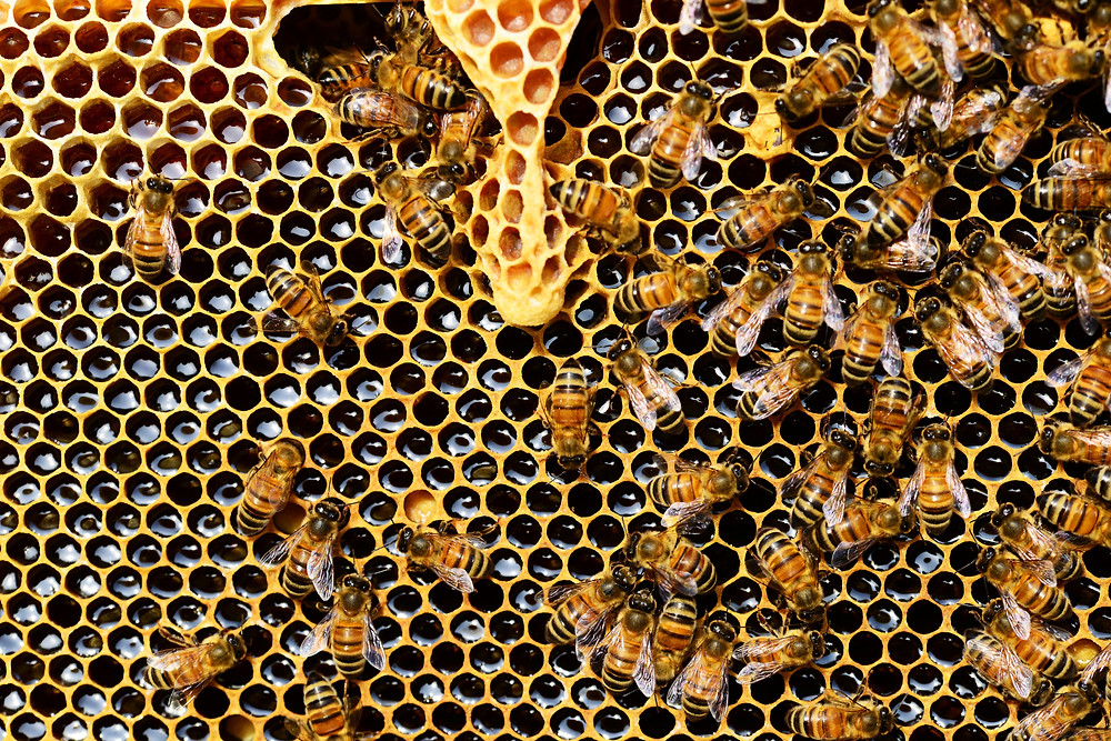 Raw Honey in the Honeycomb | Photo credit: Pexels.com