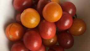 Cherry tomato taste test