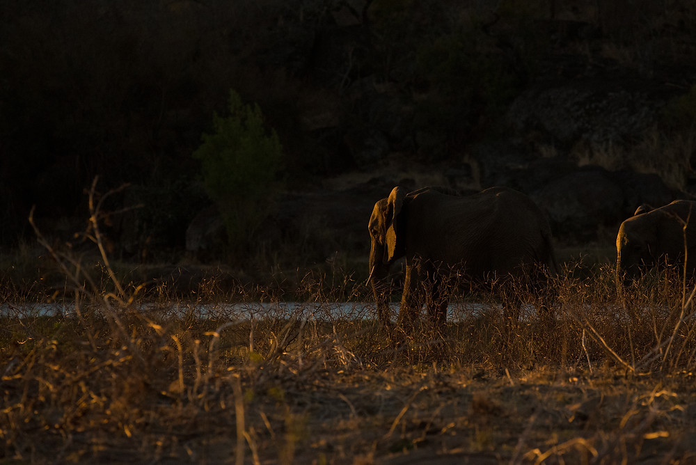 elephant, sunset, Kruger South Africa