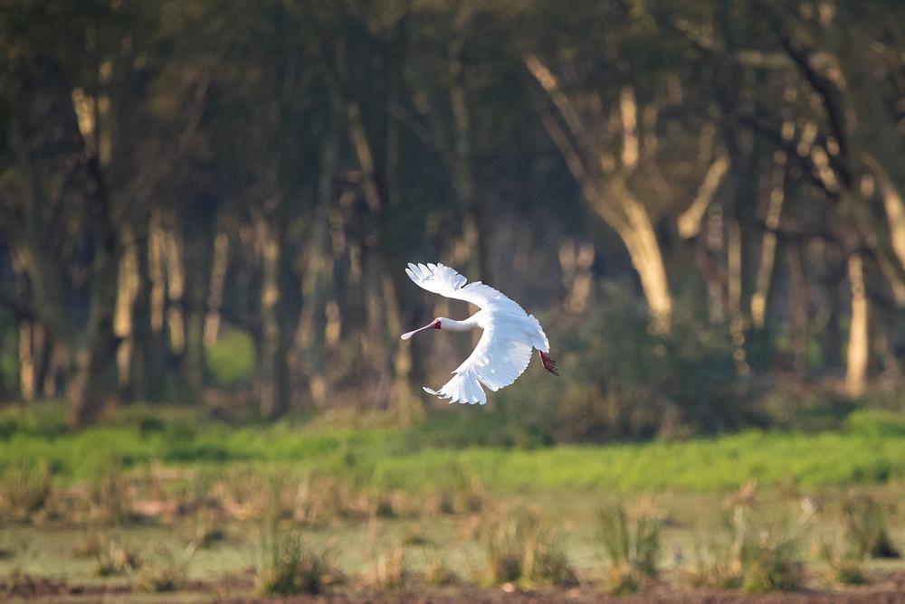 birding, bird photography, South Africa