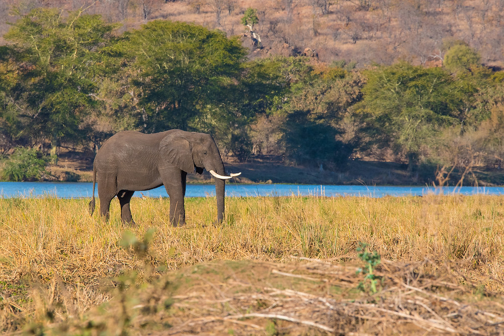 elephant, Kruger South Africa
