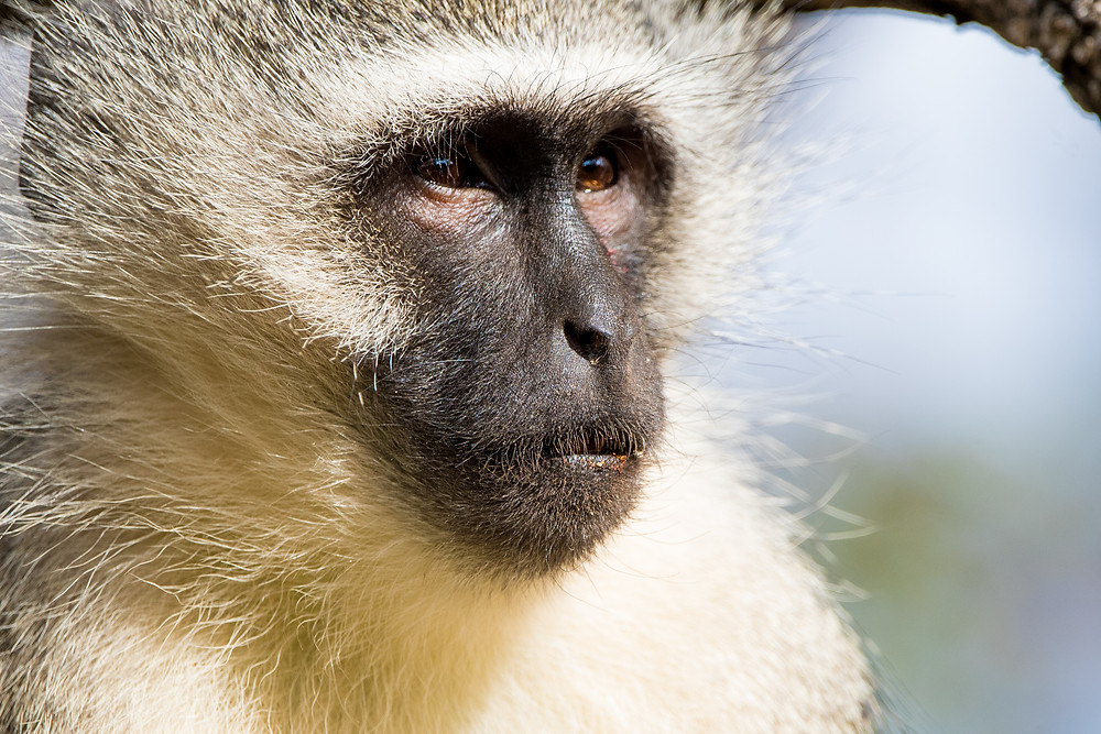 Travel photographer travels through Kruger National Park, South Africa photographing wildlife