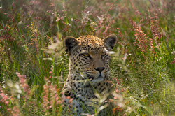 leopad and flowers