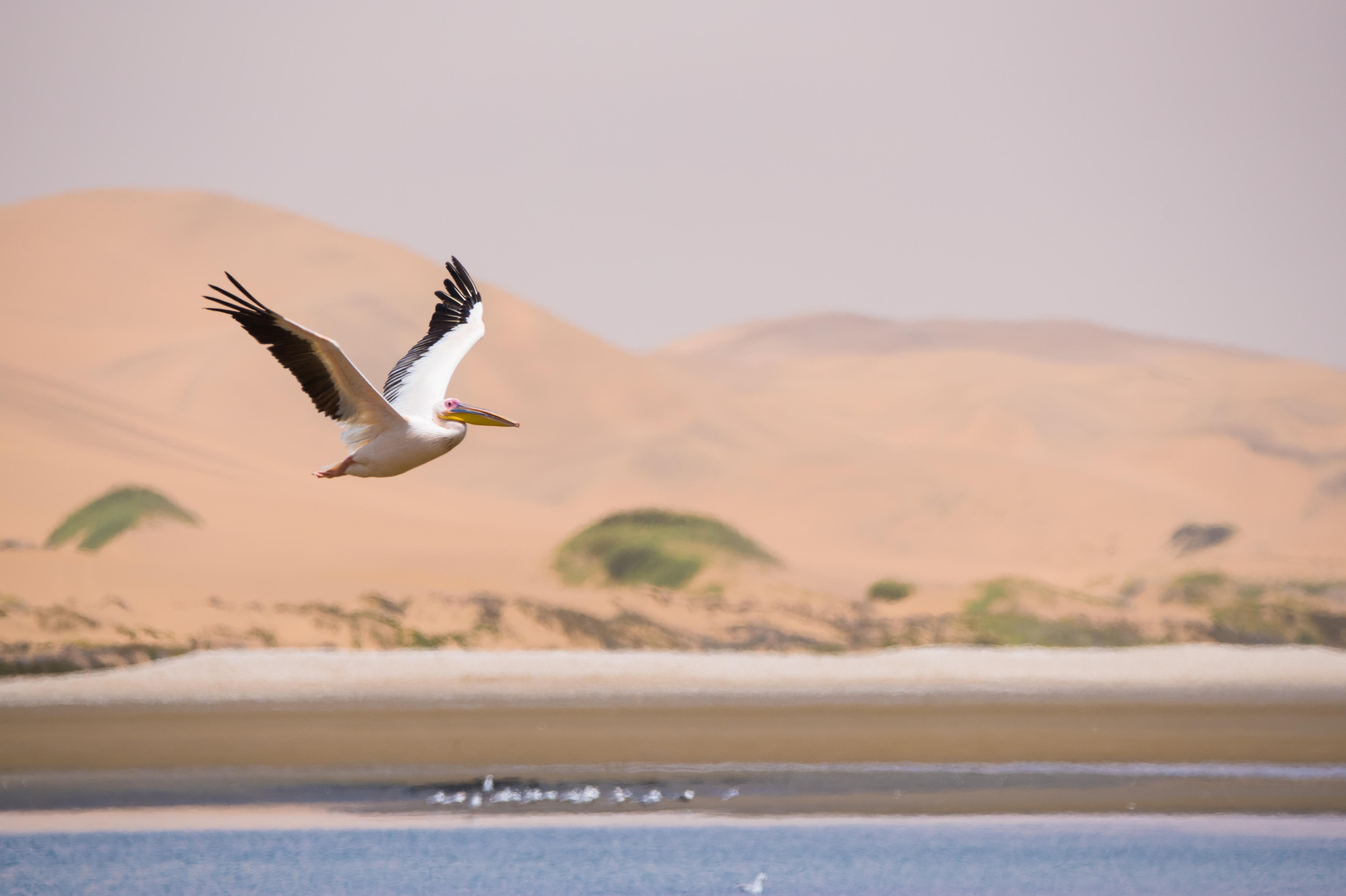 Sandwich Harbor, Namibia