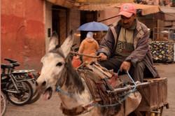 Cruelty, Morocco