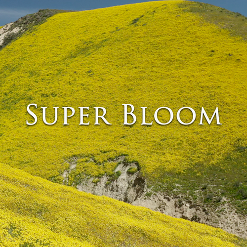 Outside Beyond the Lens - Super Bloom