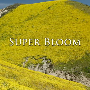 Outside Beyond the Lens - Super Bloom