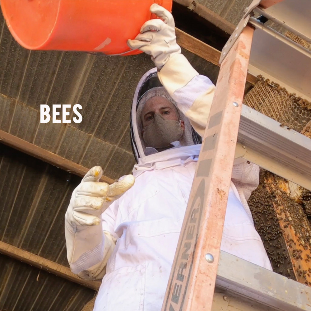 American Grown: My Job Depends on Ag - Bees