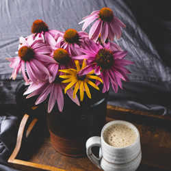 Hot chocolate in pottery mug with pottery milk jug holding echinacea blooms on walnut tray in bed