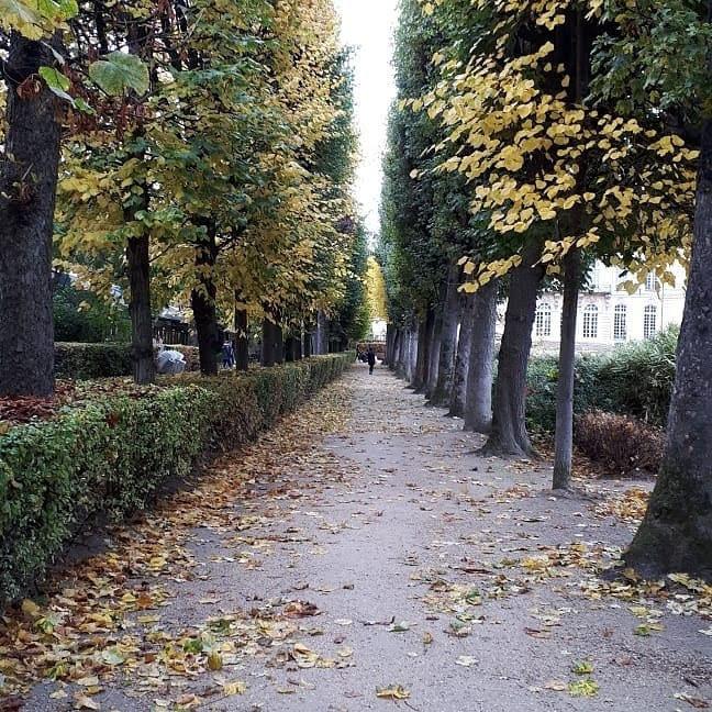 הגן ושדירת העצים בגני רודן פריז