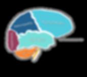 Brain_colour_new.png