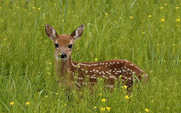 Deer on islands