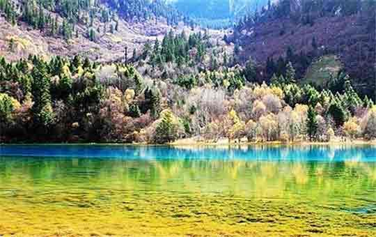 Colorful lake and forest