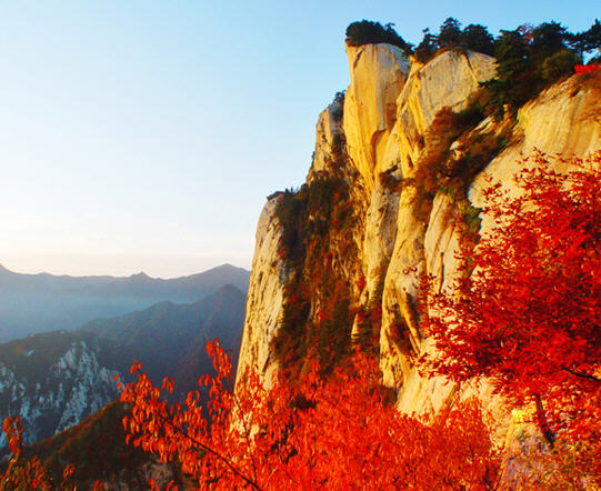 Red Leaves on Cliff