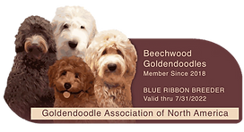 Beechwood GANA Logo.png