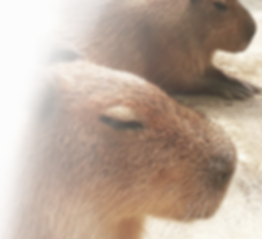 株式会社Capybara
