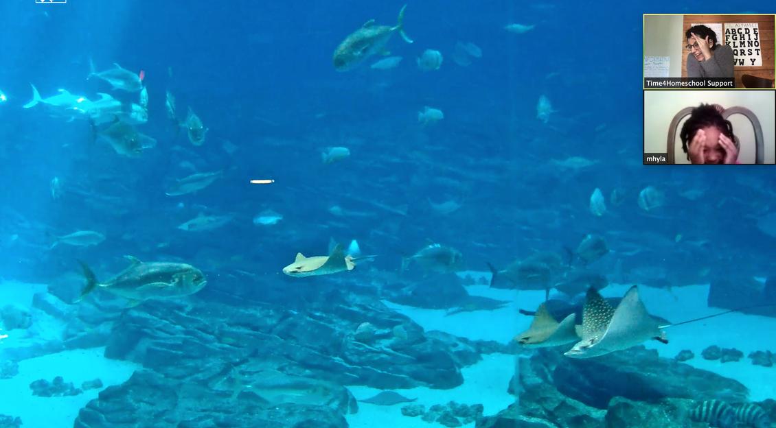 Virtual Fieldtrip to Atlanta Aquarium: Kindergarten