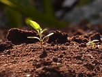 spring-young-leaves-2404083_1920.jpg