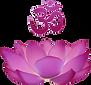 LotusblueteOm_edited.png
