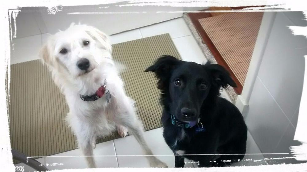 Luke & Bibi, inseparáveis
