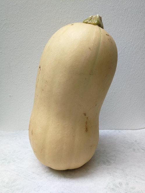Butternut Kürbis klein