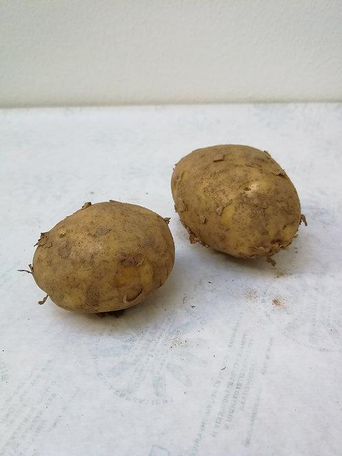 Kartoffel Nicola