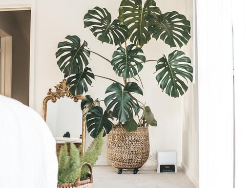 Komplett guide til hvordan ha tropiske planter inne!