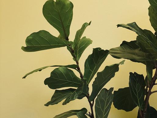 Hva gjør farger og planter med vår mentale helse?
