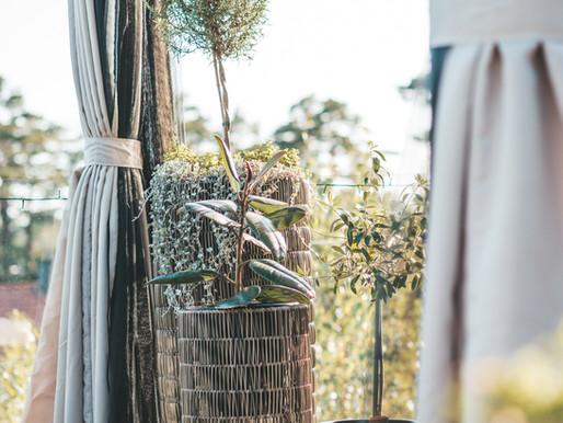 Sett ut din gummifiken på våren
