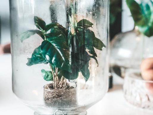 Verdens enkleste plante; Terranium.