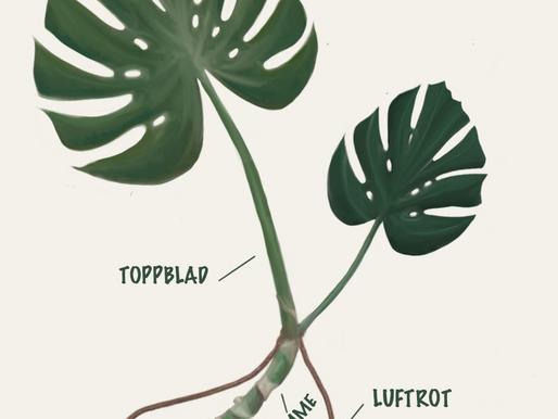 Hva er hva på planten?