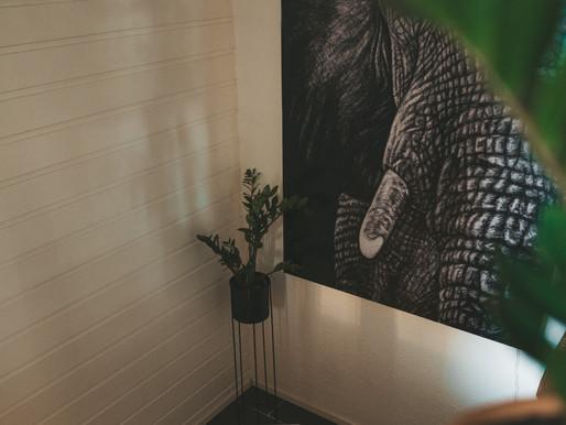 Planter for mørke rom