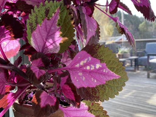 Slik unngår du solbrente planter